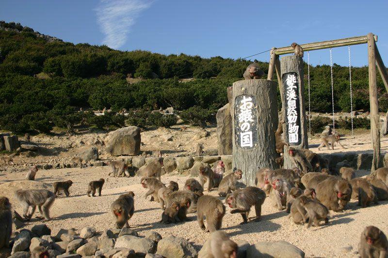 小豆島銚子渓 自然動物園お猿の国