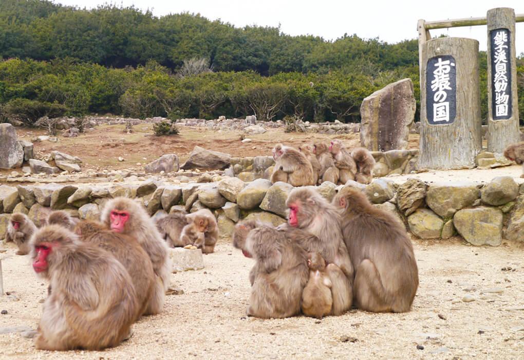 自然動物園 お猿の国