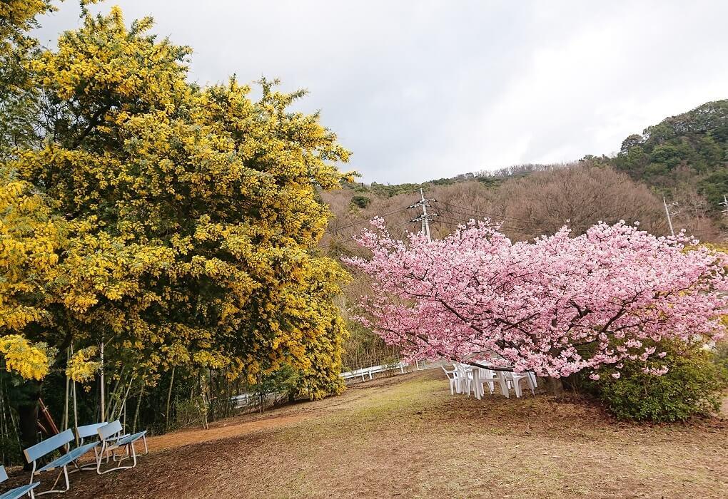 タケサン農園