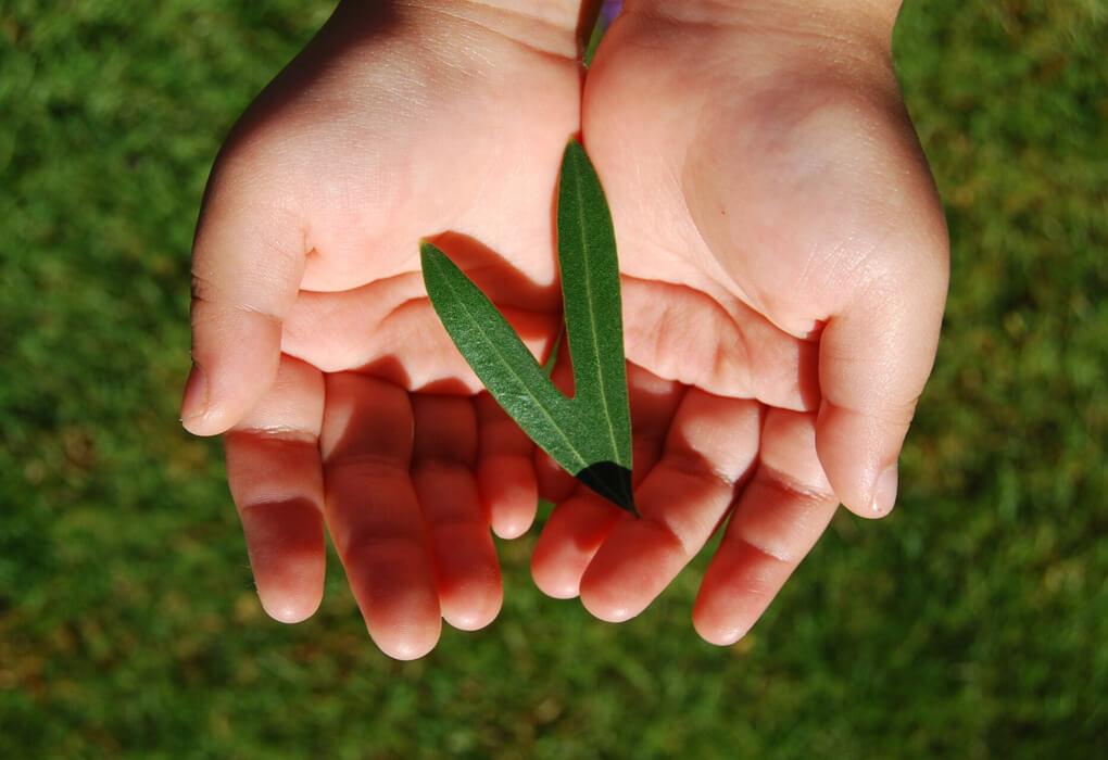 幸運のオリーブの葉