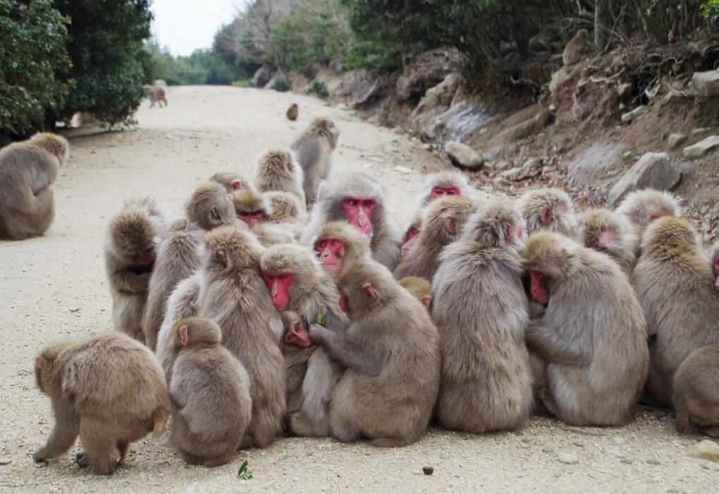 銚子渓のお猿